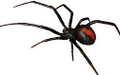 Pest & Insect Control in Shepparton