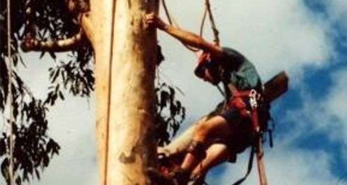 Ashgrove Tree Services Logo
