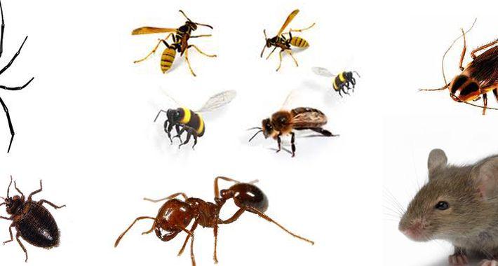 Sydney Pest Control Experts Logo