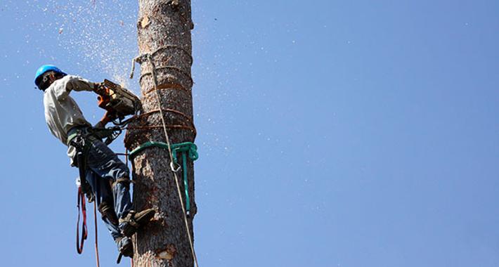 B&R Tree Services Logo