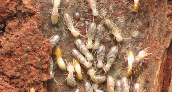 Benchmark Pest Control Logo