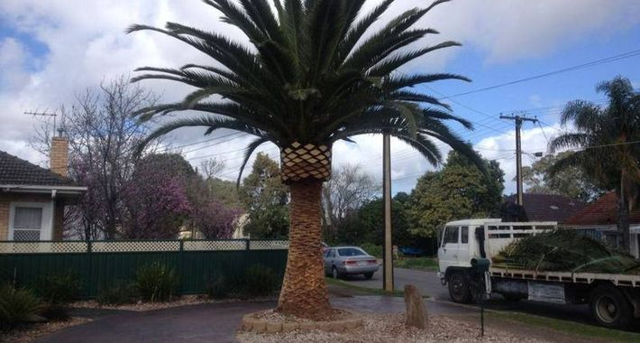 Adelaide Palm & Tree Services Logo