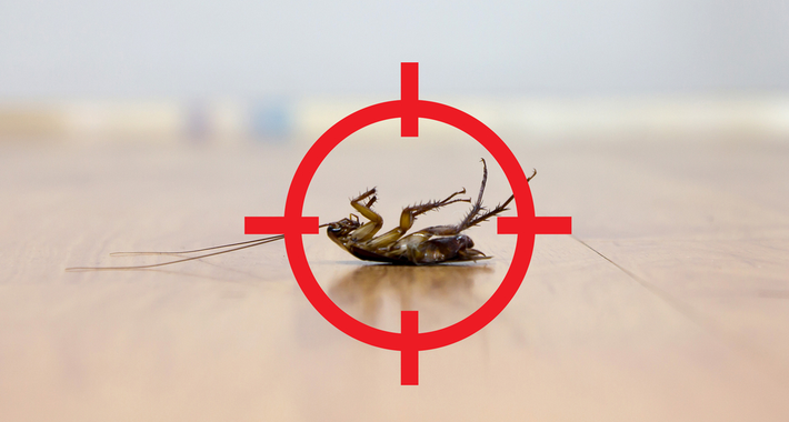 Enviro Kill Pest Control Logo
