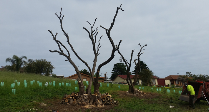 SA Tree Recyclers Logo