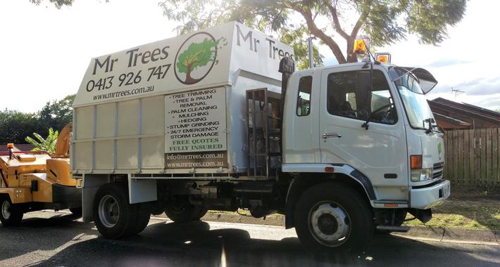 Mr Trees River Hills Logo