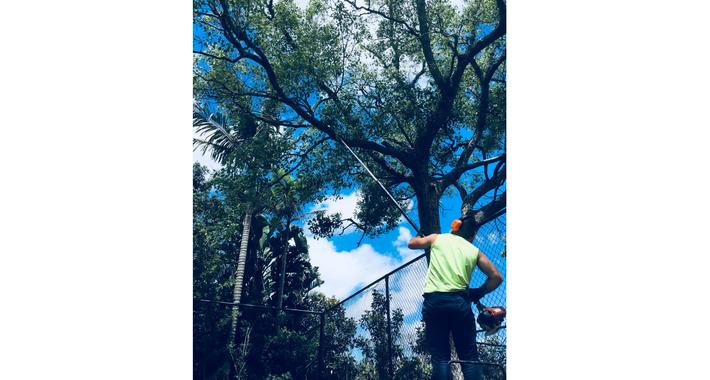 Darling Arbor Tree Services Logo