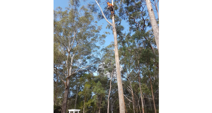 Jimmy's Tree Lopping Services Logo