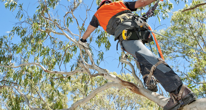 MJS Tree & Stump Contractors Logo