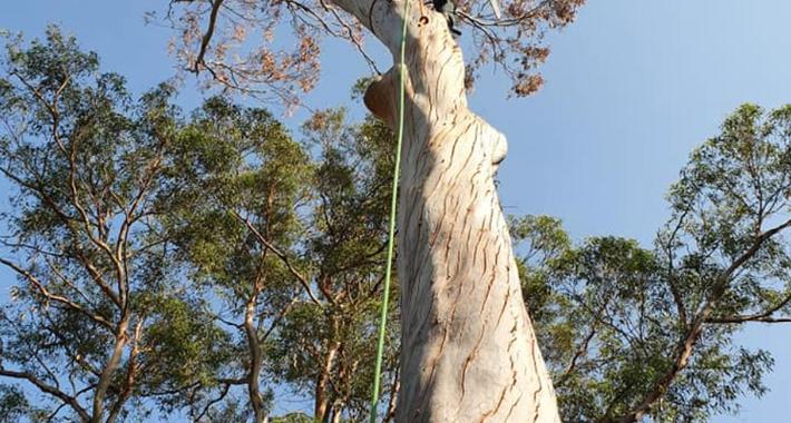Able Treescape Logo