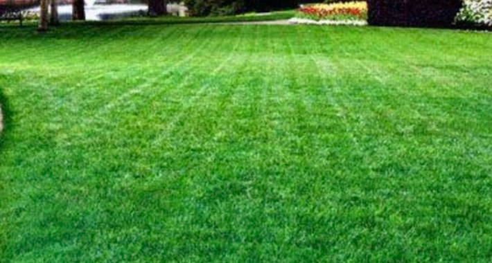 JD's Mowing and Lawn Care Logo