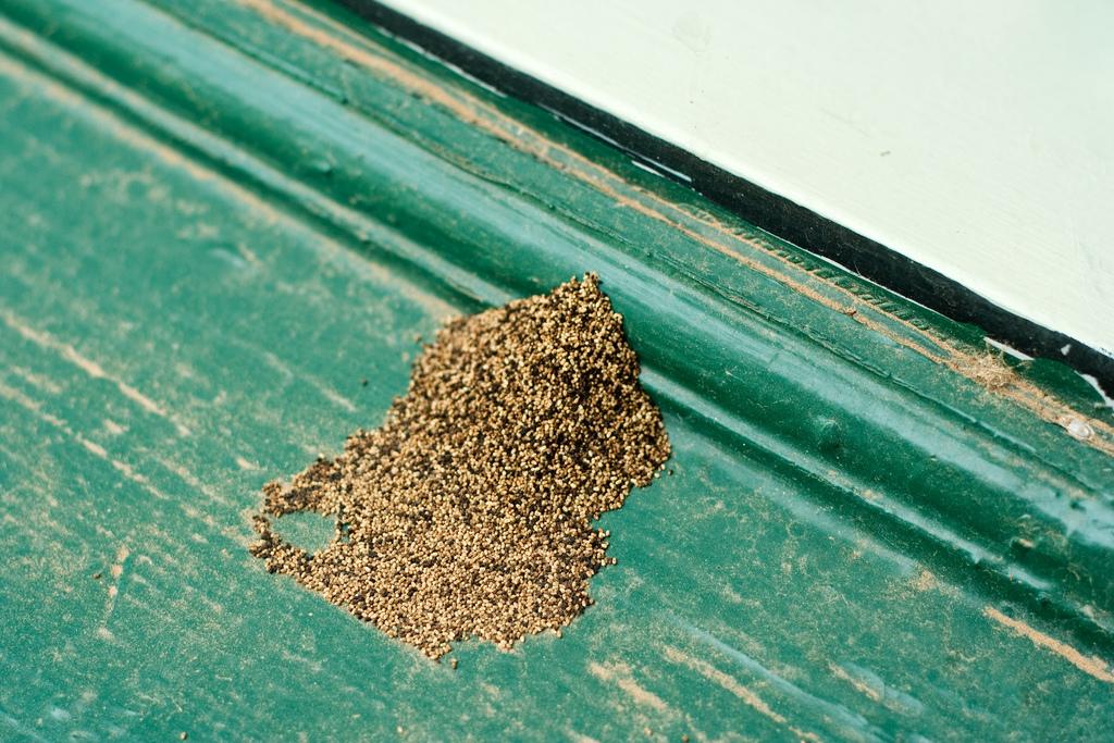 termites2.jpg