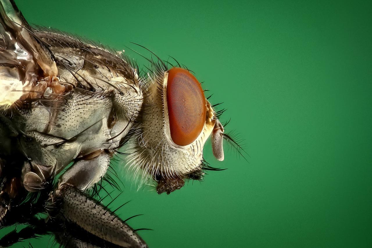 pest-control-2.jpg
