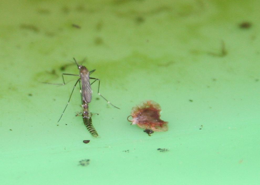 pest-control-15.jpg