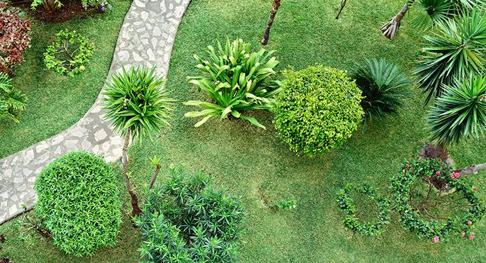 footpath through garden