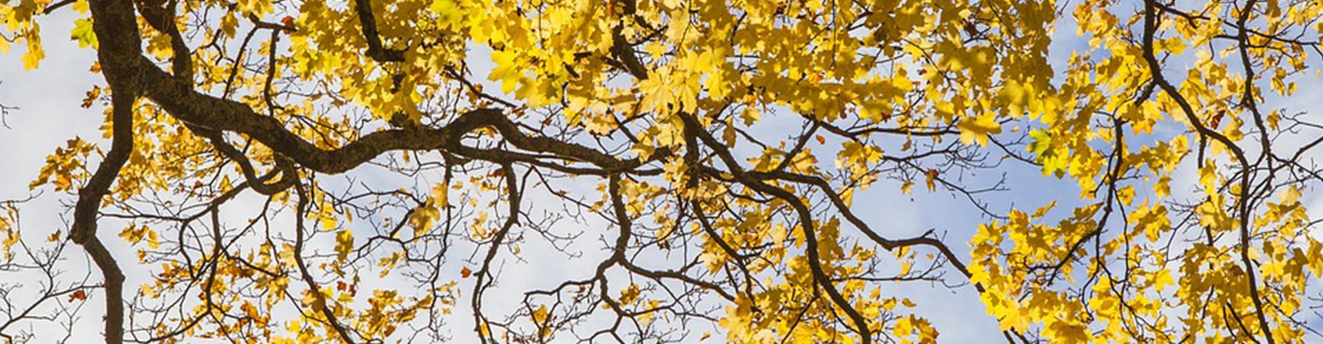 gardening-autumn-main.jpg