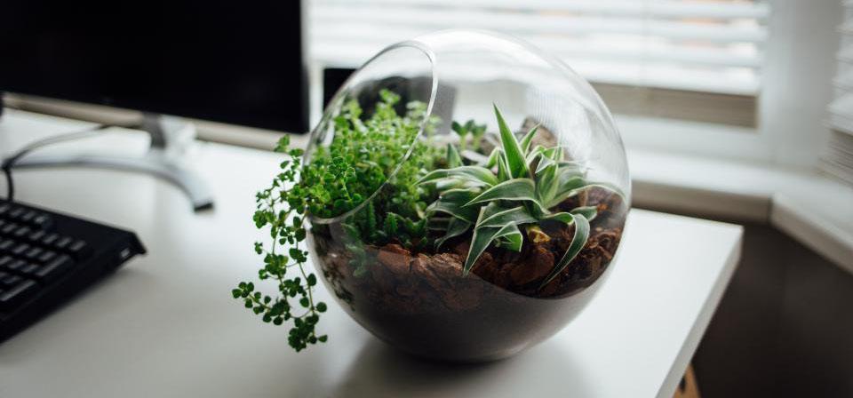 Minimalist Plant.jpg