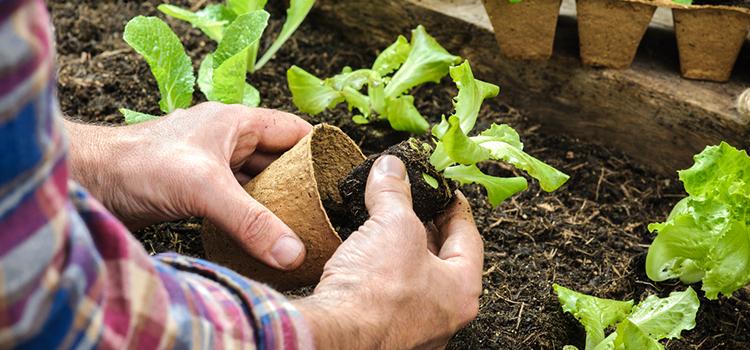 Micro Garden Basil Eggplant Baby Carrots