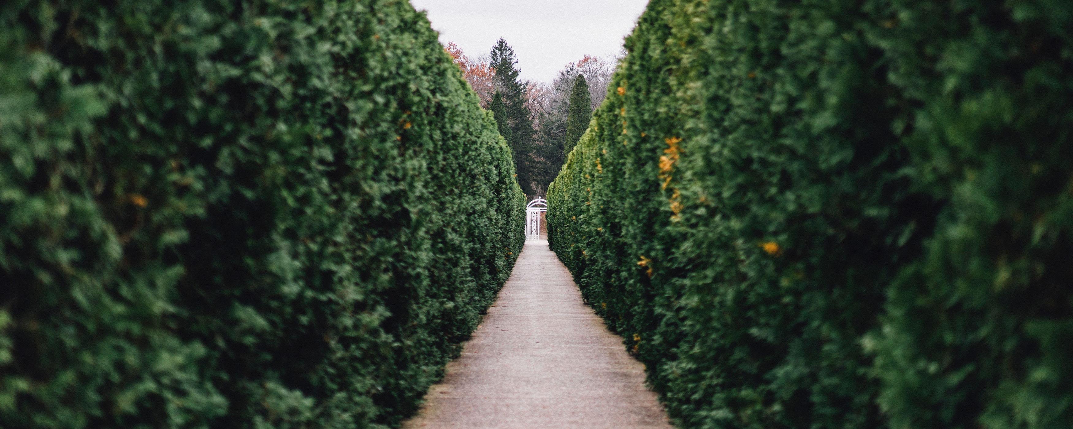backyard pathways.jpg