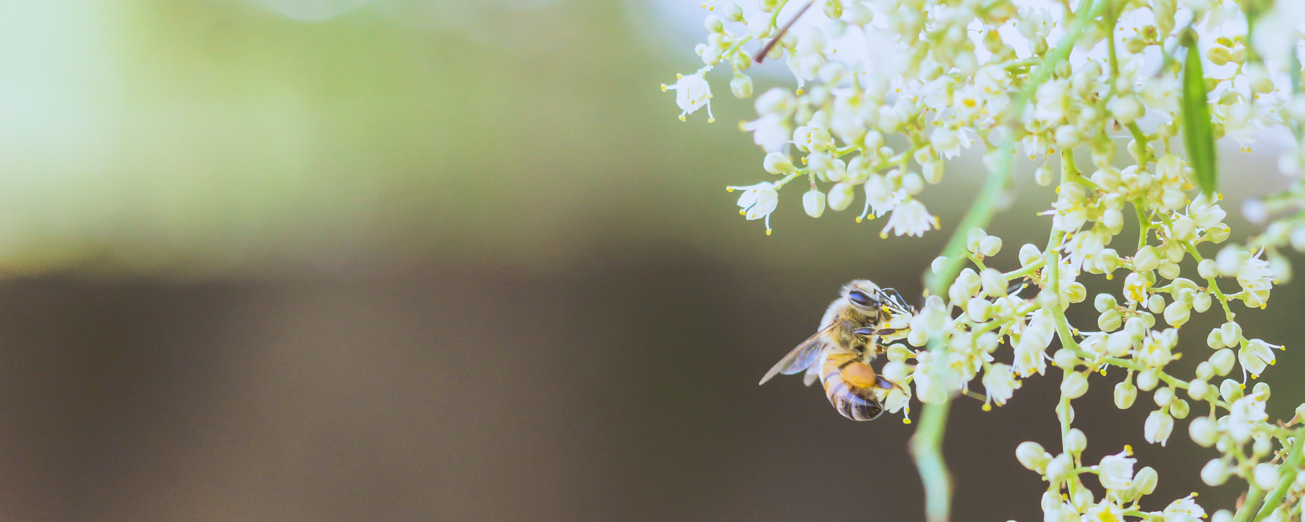 inviting pollination.jpg
