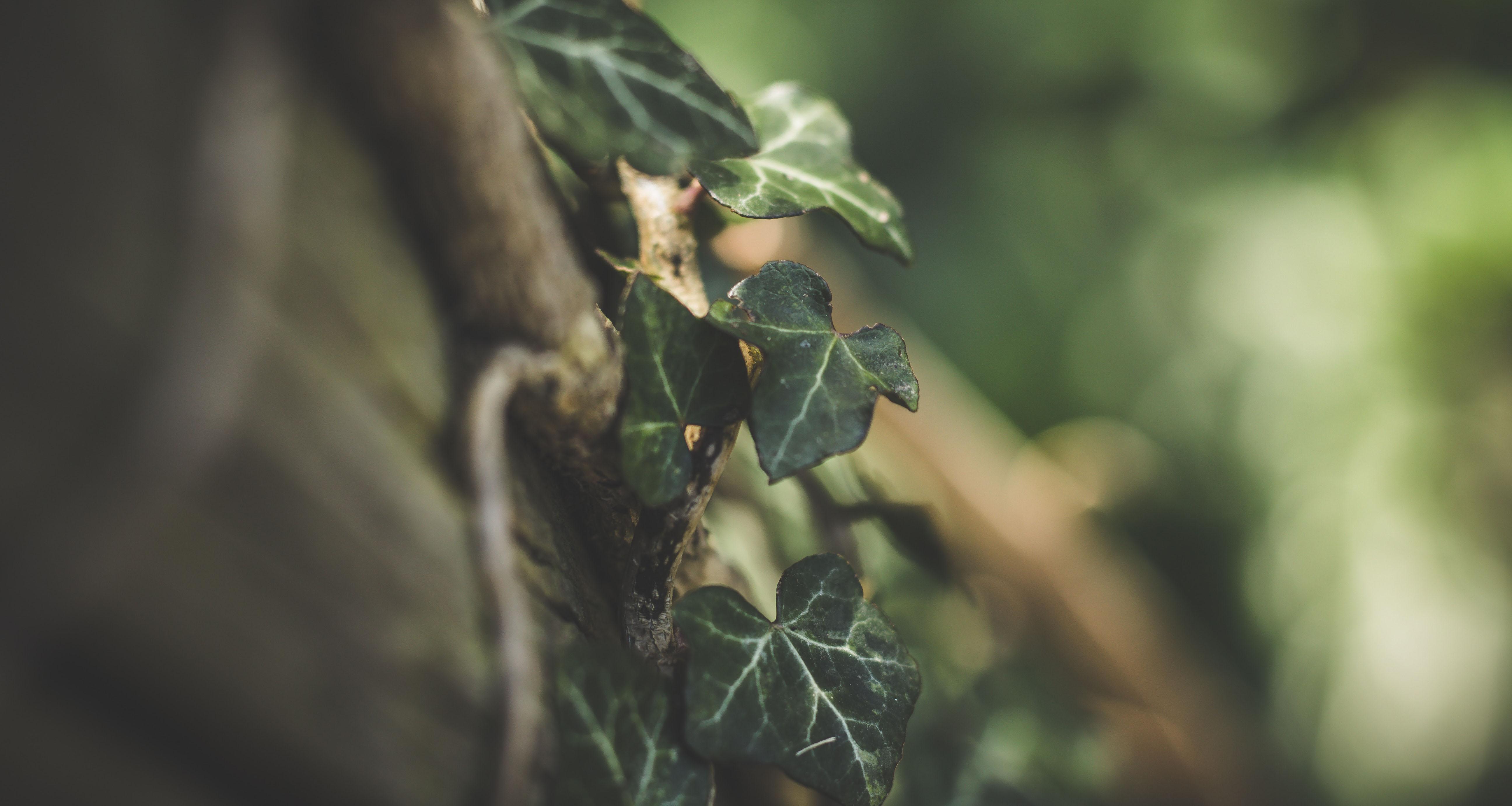 pergola climbing vines.jpg