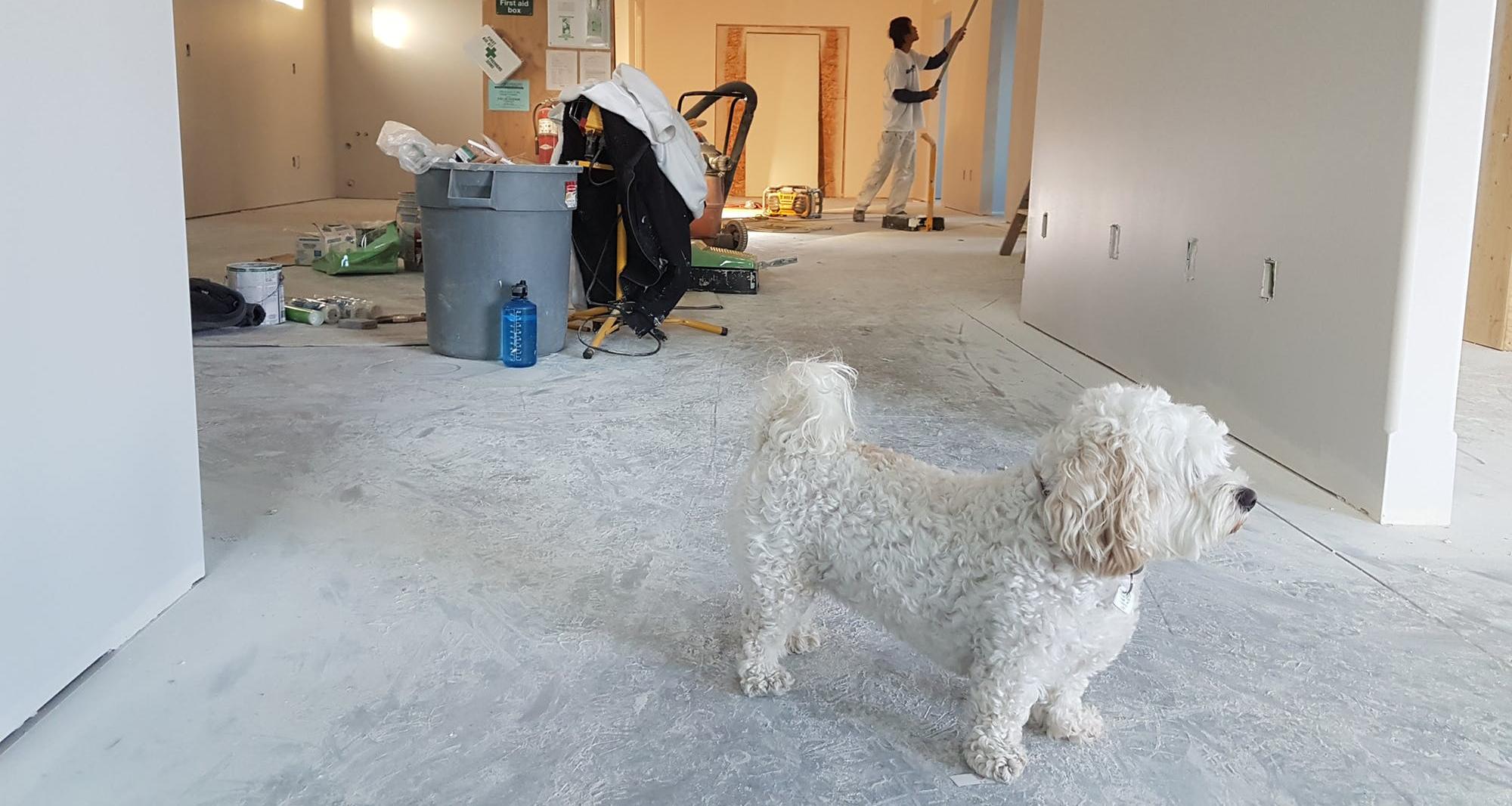 Choosing the best painter.jpeg