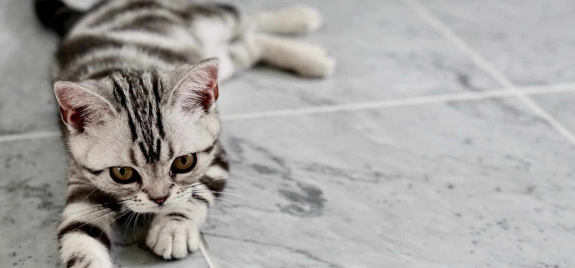 what-is-the-best-pet-friendly-flooring-9.jpeg