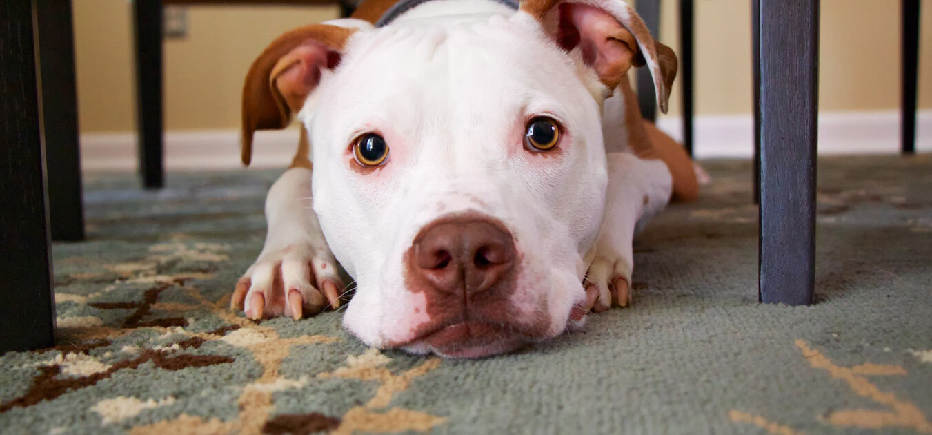 what-is-the-best-pet-friendly-flooring-1.jpg