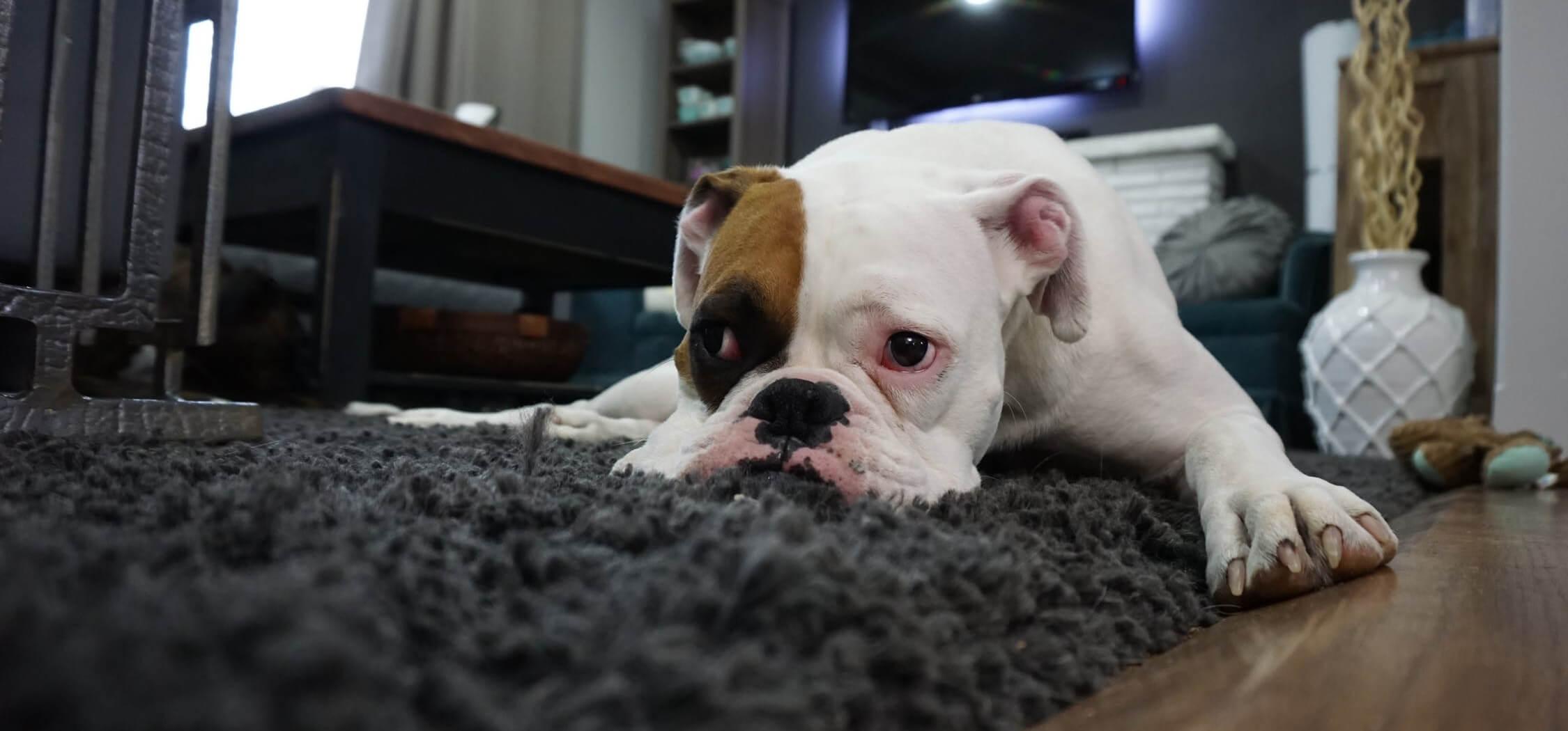 what-is-the-best-pet-friendly-flooring-7.jpeg