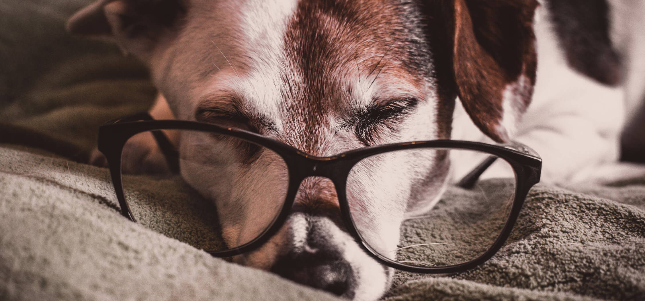 what-is-the-best-pet-friendly-flooring-5.jpeg