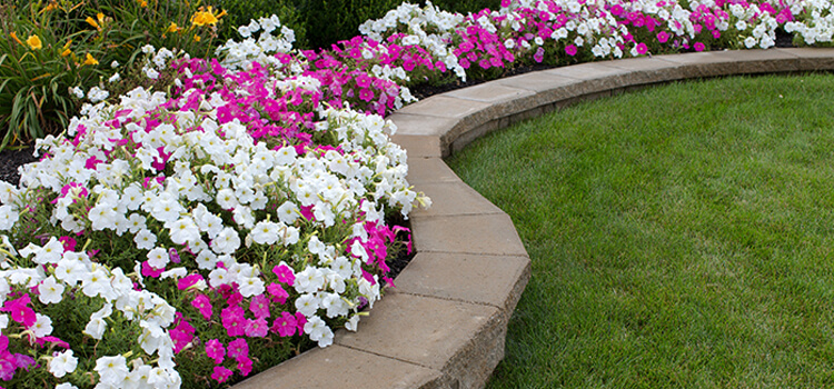 5-gardening-tips-to-increase-property-value-5.jpg
