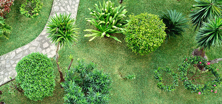 5-gardening-tips-to-increase-property-value-3.jpg