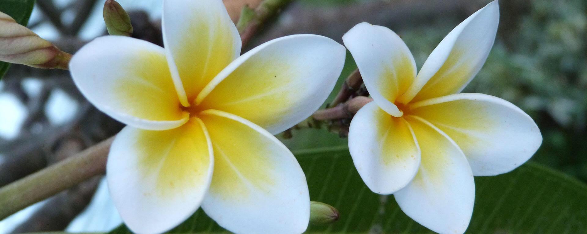 6-tips-to-create-a-Balinese-inspired-garden-2.jpg