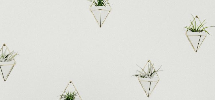 interior-garden-inspiration-4.png