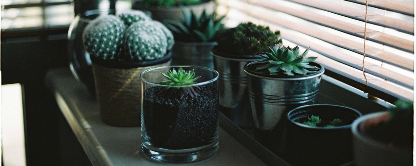 interior-garden-inspiration-2.jpg