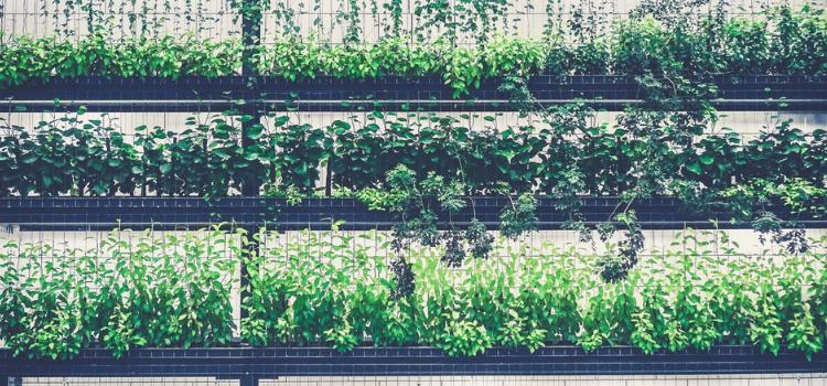 create-an-indoor-vertical-garden-1.png