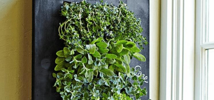 create-an-indoor-vertical-garden-6.png
