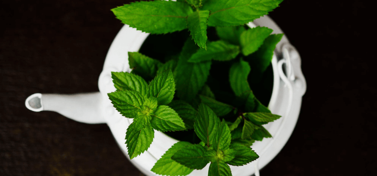 6-reasons-your-herb-garden-might-have-failed-5.png