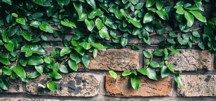 create-an-indoor-vertical-garden-2.png