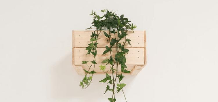 create-an-indoor-vertical-garden-5.png