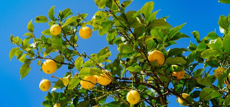 8-beginner-plants-for-edible-gardens-8.png