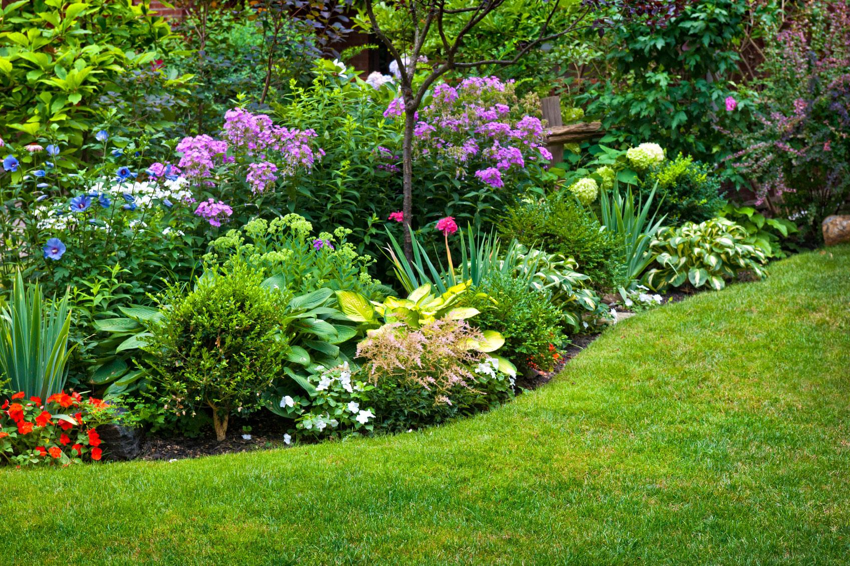 perennials in the garden