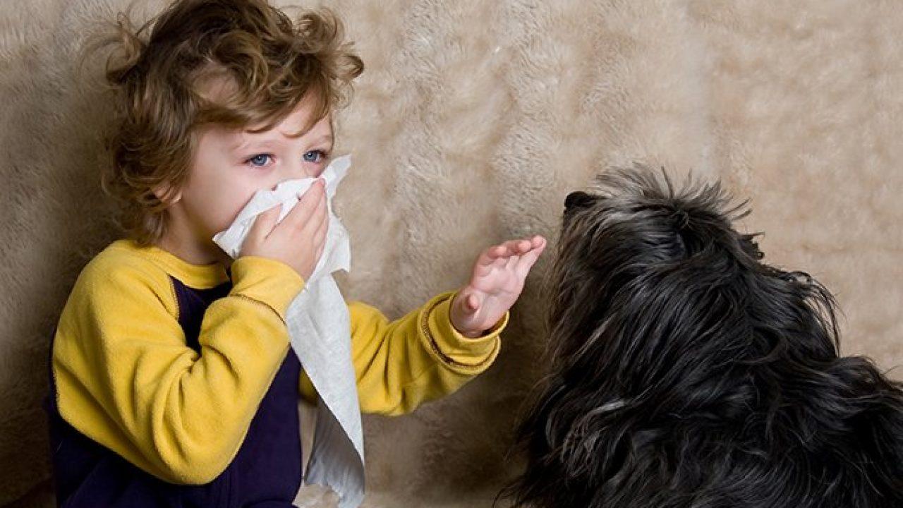 boy getting allergy from dog