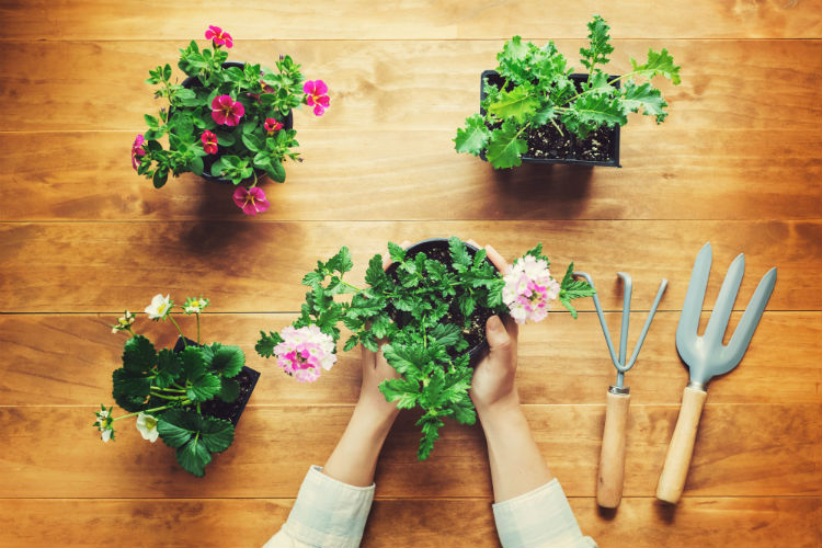 Hands working with plants with gardening tools