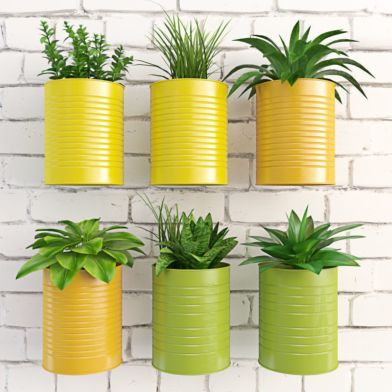 Plants in cans