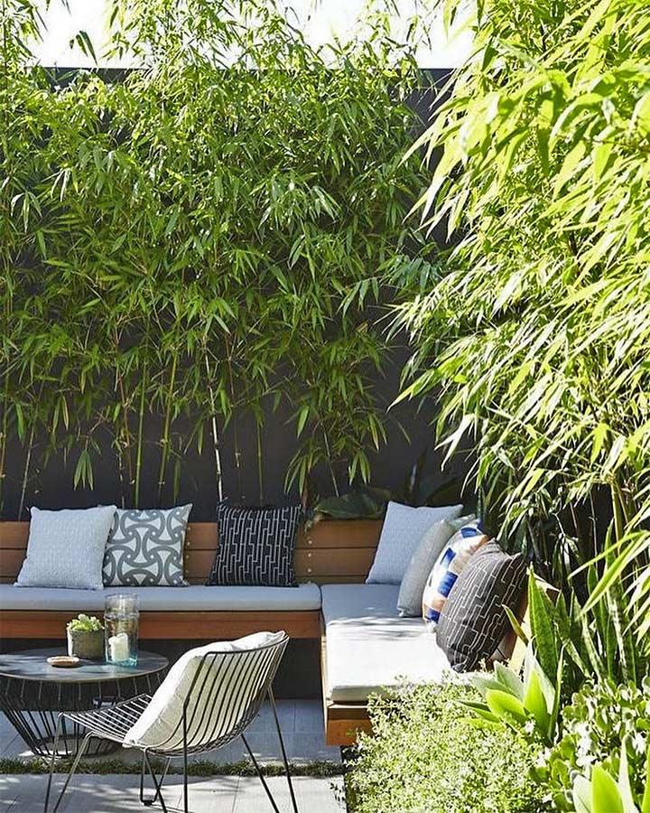 bamboo plants in balcony