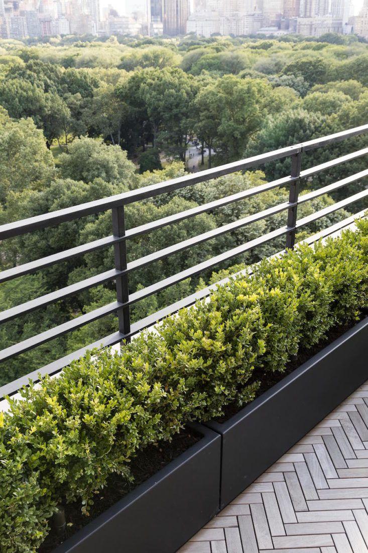 Line of plants on balcony
