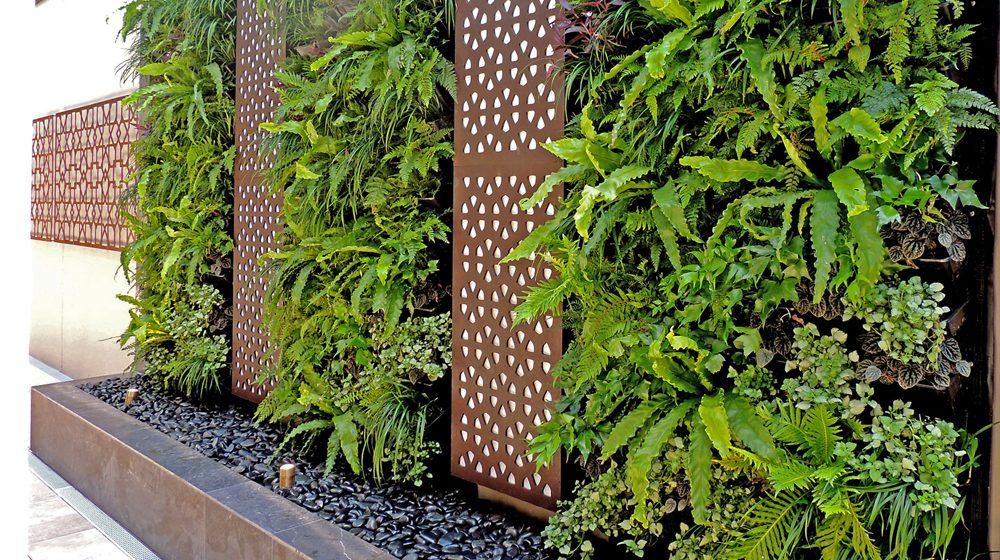 Green wall for privacy