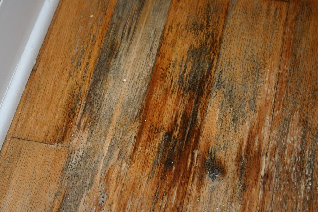 Mold on timber